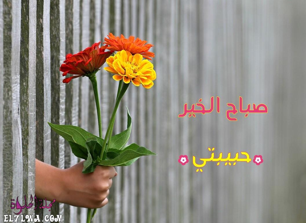 صباح الخير حبيبتي - عبارات صباحية رمزيات صباح الخير كلمات صباح الخير