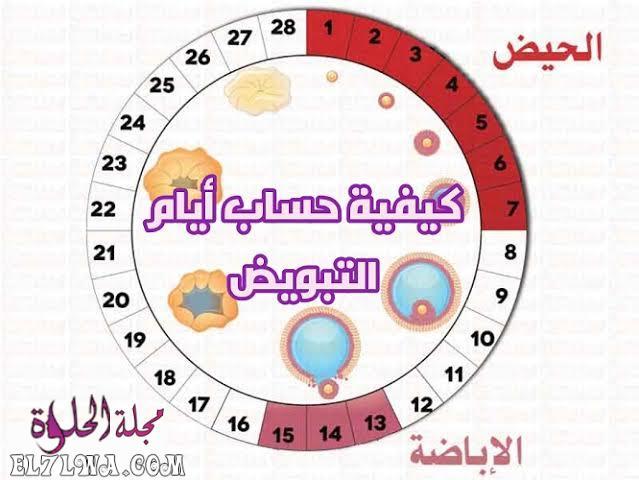 جدول ايام التبويض بعد الدورة مجلة الحلوة