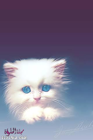 صورة قطة كيوت صور خلفيات بيضاء للموبايل تحميل خلفيات موبايل جديدة