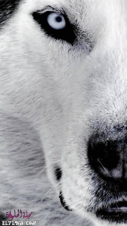 صور خلفيات بيضاء للموبايل كيوت