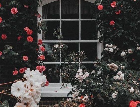 خلفيات ورود جميلة جدا خلفيات ورد طبيعي صور خلفيات ورد