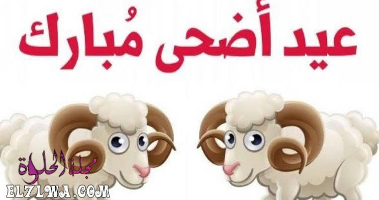 خروف العيد عيد الأضحى 2021 تهنئة عيد الأضحى صور عيد الأضحى